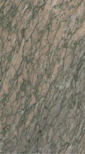 Cipollino Francese