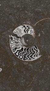 Grande Fossile
